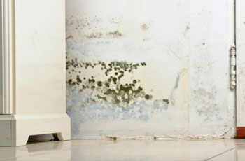 mold-inspection-service